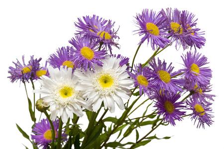p�querette: Bouquet de marguerites blanches et violettes isol� sur fond blanc