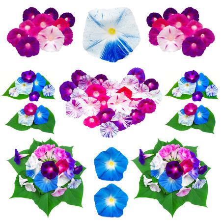 corazones azules: Colección gloria de la mañana colorido de las flores y los corazones aislados sobre fondo blanco