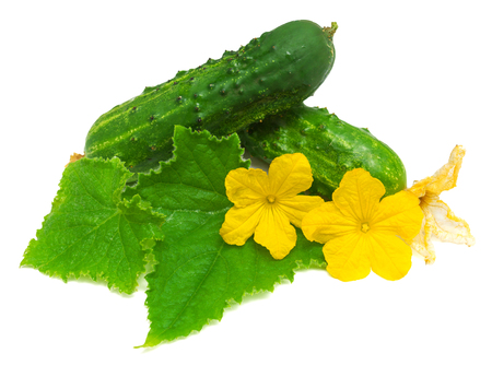 Cucumber with leaves and flowers isolated on white background Stock Photo