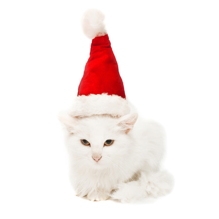 christmas pussy: White Christmas cat in the hat isolated on white background