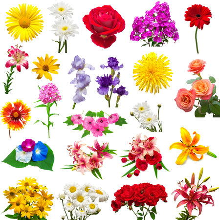 Collection of beautiful colorful flowers isolated on white background. Summer. Spring. Flat lay, top view. Love. Valentines Day. Easter. Lilies, iris, chamomile, rose, hibiscus, lavatera, morning glory