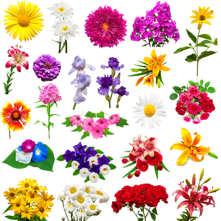 Collection of beautiful colorful flowers isolated on white background. Summer. Spring. Flat lay, top view. Love. Valentine's Day. Easter. Lilies, iris, chamomile, chrysanthemum, rose, hibiscus, lavatera, petunia, zinnia, morning glory Archivio Fotografico