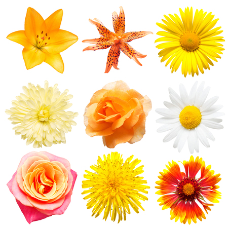 Beautiful collection daisy, dandelion, rose, lily and chrysanthemum isolated on white background. Card flowers. Easter. Spring Set. Flat lay, top view