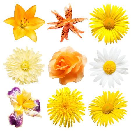 Beautiful collection iris, daisy, dandelion, rose, lily and chrysanthemum isolated on white background. Card flowers. Easter. Spring Set. Flat lay, top view