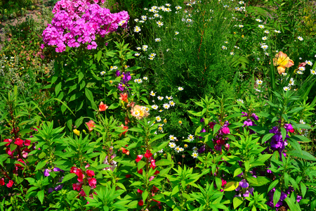 Flower garden and flowerbeds with lilies, daylilies, phlox, chamomile, thuja, petunia and others. Beautiful park.