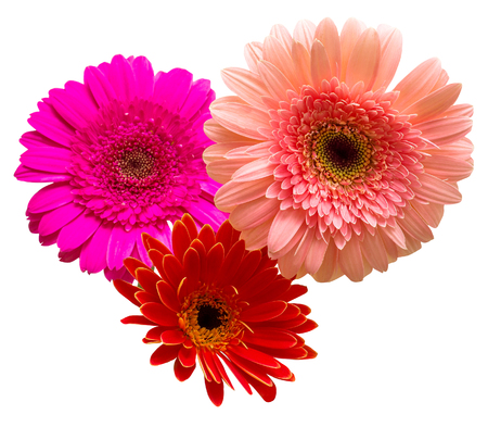 Bouquet of flowers gerberas isolated on white background. Flat lay, top view