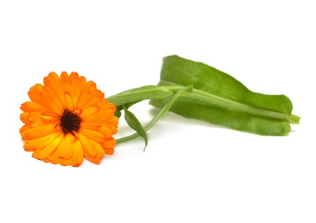 Flower of calendula officinalis bouquet with leaves isolated on white background. Marigolds, medicinal plants. Golden petals  스톡 콘텐츠