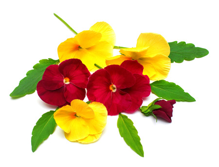 A beautiful bouquet with yellow and red pansy flowers. Branch and leaf with a bud. Flat lay, top view Stock Photo