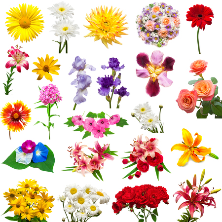 Collection of beautiful colorful flowers dahlia, carnation, lilies, iris, chamomile, rose, hibiscus, lavatera, morning glory isolated on white background. Summer. Spring. Flat lay, top view. Love. Valentine's Day. Easter. Stock Photo