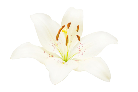 Beautiful delicate white lily macro isolated on white background. Wedding, bride. Fashionable creative floral composition. Summer, spring. Flat lay, top view. Love. Valentines Day