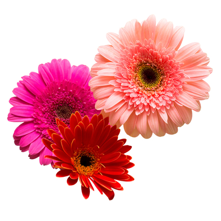 Bouquet of beautiful delicate flowers gerberas isolated on white background. Fashionable creative floral composition. Summer, spring. Flat lay, top view