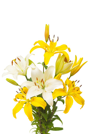 Bouquet of beautiful delicate white and yellow lilies isolated on white background. Wedding, bride. Fashionable creative floral composition. Summer, spring. Flat lay, top view. Love. Valentines Day