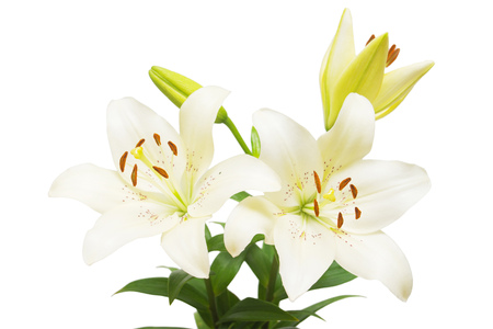Bouquet of beautiful delicate white lilies isolated on white background. Wedding, bride. Fashionable creative floral composition. Summer, spring. Flat lay, top view. Love. Valentine's Day Standard-Bild