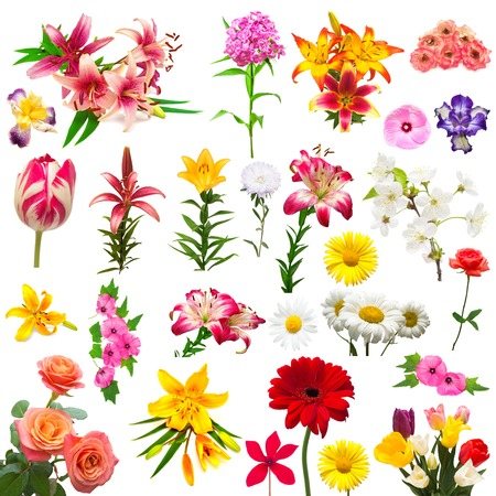 Collection of beautiful colorful flowers tulips, carnation, lilies, iris, chamomile, rose, hibiscus, lavatera, morning glory, phlox, astra, cyclamen isolated on white background. Summer. Spring. Flat lay, top view. Love. Valentines Day. Easter.