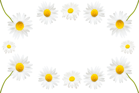 Collection of creative daisies flowers isolated on white background. Flat lay, top view. Place for text