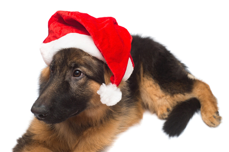 German Shepherd dog Santa Claus in a Christmas cap isolated on a white background. New Year, Friend Archivio Fotografico