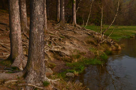 river bank: roots of trees on the river bank