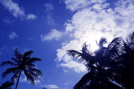 cloude: Sun hidden behind the palm tree and white cloude on blue sky