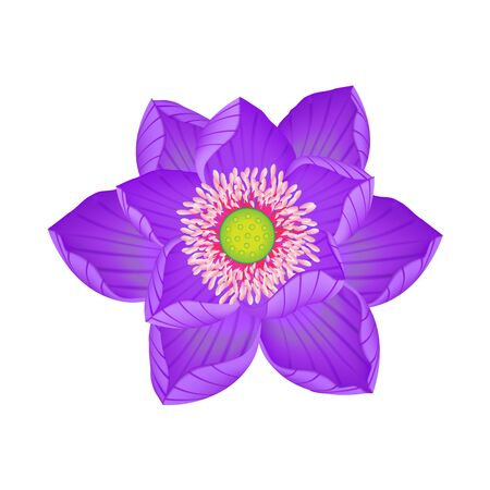lotus flower, water lily isolated on white background, vector illustration