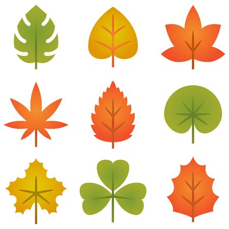 Set of colorful autumn leaves collection, cute leafs for design element, Vector illustration