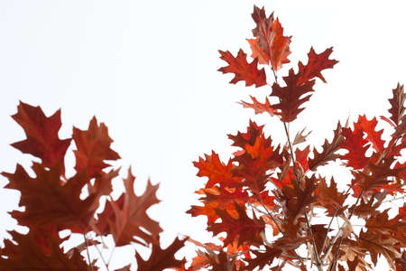 fall leaves as autumn background photo