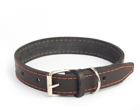dogs collar photo