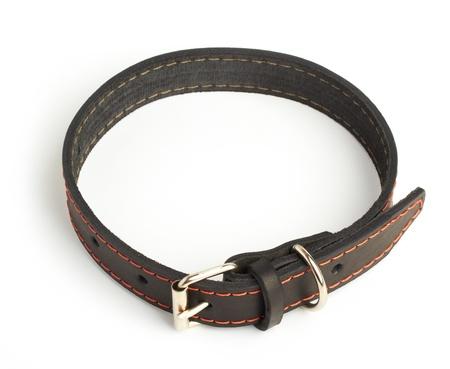 dog collar: dogs collar