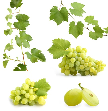 green grapevine leaves and grapes collage