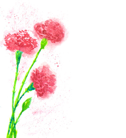carnation: picture of the clove flowers Illustration