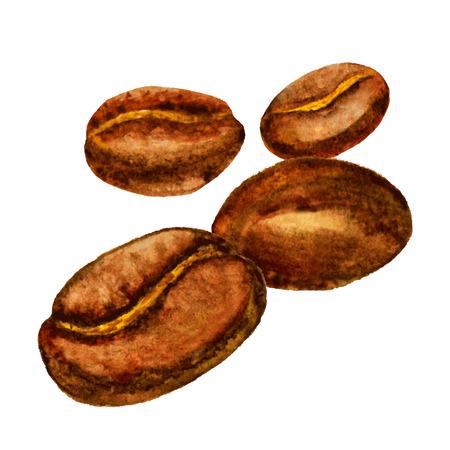 coffee beans: Hạt cà phê màu nước