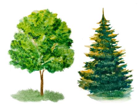 hemlock: conjunto de árboles de acuarela aislado en blanco