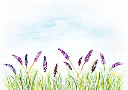 grass flower: watercolor abstract background with grass and violet flowers