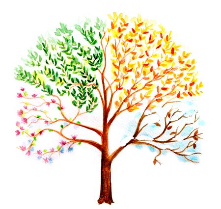 cuatro elementos: árbol de la acuarela pintada a mano con efecto de cambio de estaciones en su corona