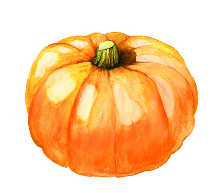 fruit stem: hand painted watercolor pumpkin isolated on white