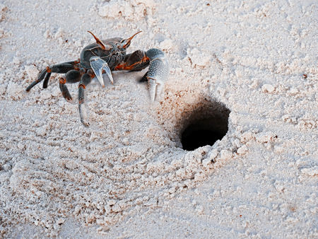 Crab on the sand on the Seychelles Stock Photo