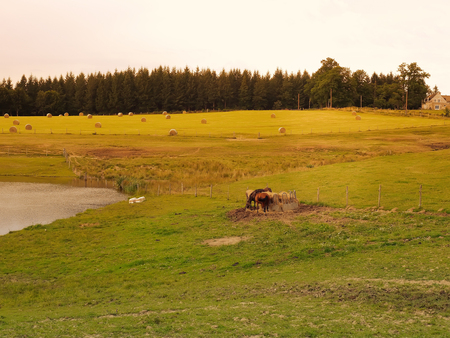 normandy: Horses graze on a meadow at sunset France. Landscape suburbs of French villages