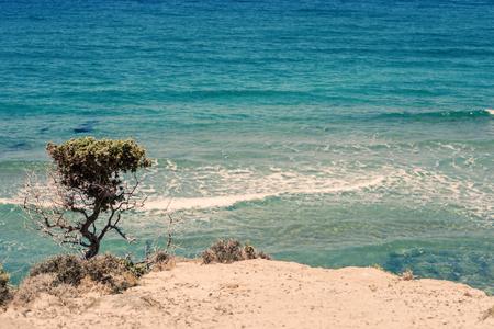 Small tree on Kos Island in the vicinity of Kefalos. Greek island kos Stock Photo