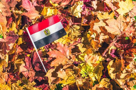Egyptian flag lying on the maple leaves in the autumn forest at the morning at dawn. Concept. Top view. Indian summer.