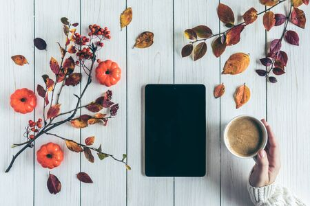 Woman with cup of coffee and tablet, leaves, rowan and small pumpkins on white retro wood boards. background. Autumn, fall concept. Flat lay, top view.