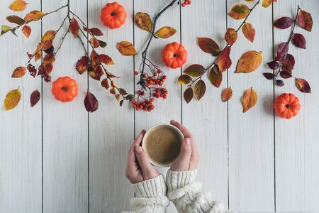 Woman with cup of coffee, leaves, small pumpkins and rowan on white retro wood boards. background. Autumn, fall concept. Flat lay, top view.