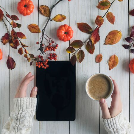 Woman with cup of coffee and tablet, leaves, rowan and small pumpkins on white retro wood boards. background. Autumn, fall concept. Banco de Imagens