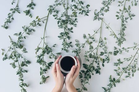 Female hands with a cup of herbal tea in branches with green leaves on a white table. Tea art. Flat lay, top view. Banco de Imagens