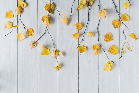 birch branches with yellow leaves  on white retro wood boards. background. Autumn, fall concept. Flat lay, top view.