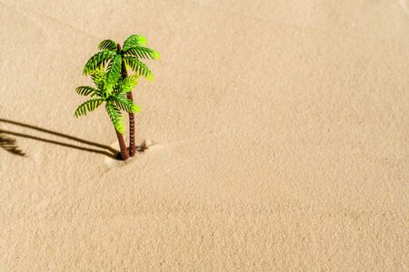 Aerial view of lonely palm tree on sandy deserted beach. copy space. Summer and travel concept. Minimalism