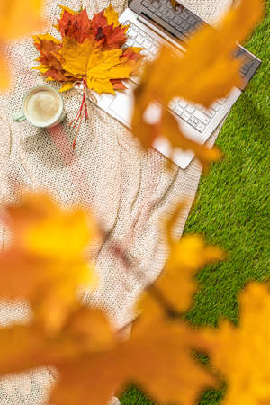Autumn. Plaid, laptop, cup of coffee under branch of golden maple leaf on the green grass. Concept. Vertical ratio. Top view