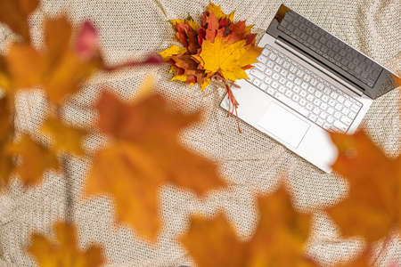 Autumn. Plaid, laptop under branch of golden maple leaf on the green grass. Concept. Top view