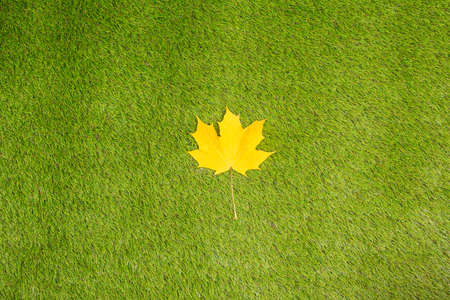 Top view of maple leaf on the green grass. Creative and minimalism. Season change, autumn is coming. Nature concept.