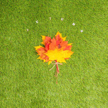 Top view of bouquet of colorful maple leaf on the green grass. Creative and minimalism. Season change, autumn is coming. Nature concept. Stok Fotoğraf