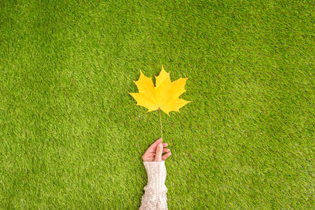 Top view woman hand with yellow maple leaf on the green grass. Creative and minimalism. Season change, autumn is coming. Concept