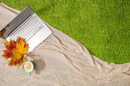 Autumn. Plaid, laptop, cup of coffee bouquet of maple leaves on the green grass. Concept. Top view Stok Fotoğraf